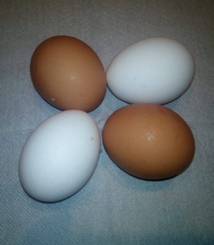 White or brown eggs