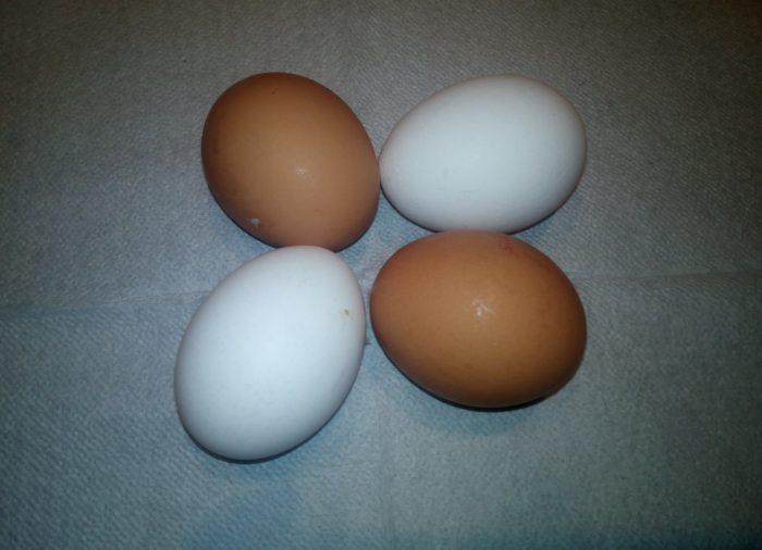 Бели или кафени јајца
